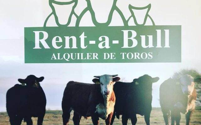 imagen rent a bull 640x400 Trazabilidad animal uruguaya interesa al gobierno de China